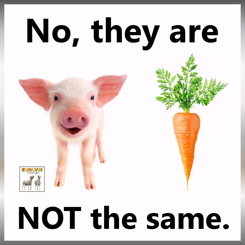 faq   go vegan world
