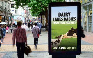 dairy-takes-babies-web