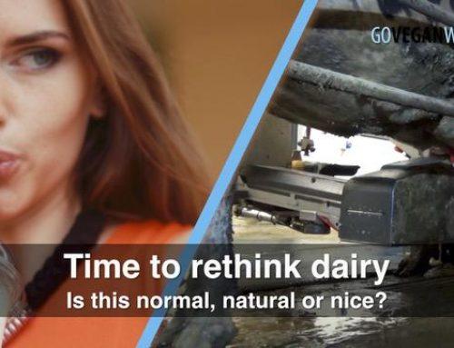Rethinking Dairy