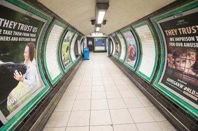 Go Vegan World Campaign in metro