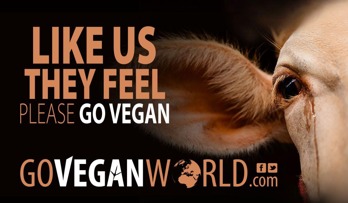 like us they feel go vegan world